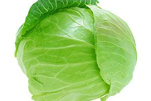 cabbage-300,200